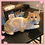 Princess - Lion Cut