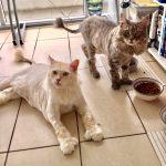 Aslan & Murphy - Lion Cut