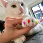 Soft Paws (nail caps)